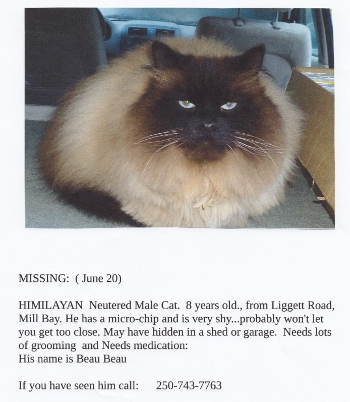 my outdoor cat is missing